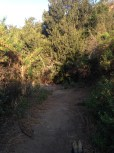cyn_trail