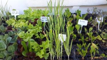 Organic Fresh Herbs and Veggies