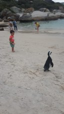Swimming with Pingu the Penguin!