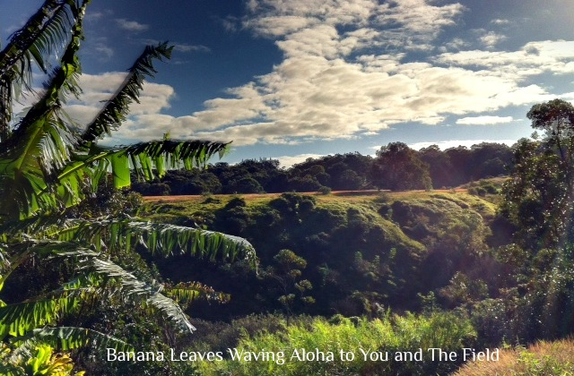 photo of banana leaves waving to a field in the distance