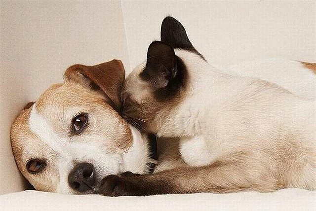 Cat and Dog photos by b1lue5ky on Flickr