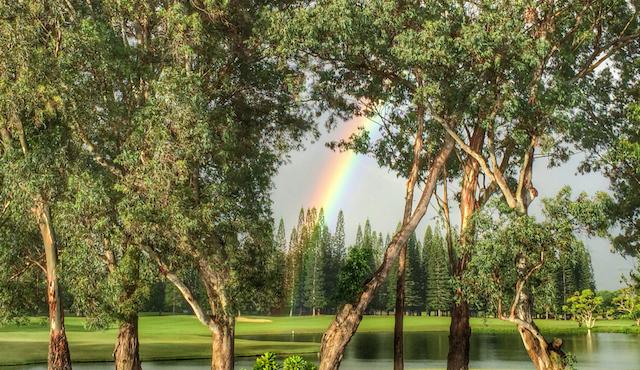 Kauai rainbow through the trees