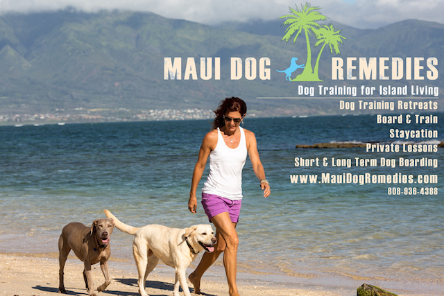 JT of Maui Dog Remedies, walking her dogs