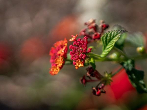 2016_11_24_flower-copy
