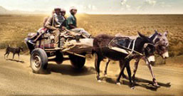 "South Africa's ""buggy people"" in The Karoo."