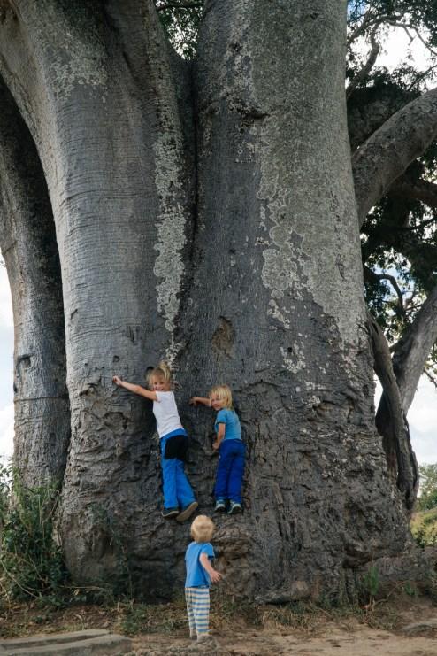 Gruppenbild vor Affenbrotbaum