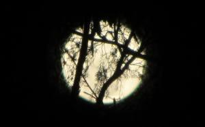 alicia's moon