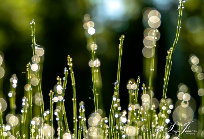 lights on grass, bokeh, those who crossed my path