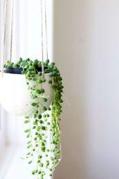indoor-plant1