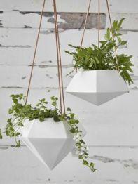 indoor-plant4