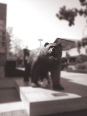 artsy bear_edited-1