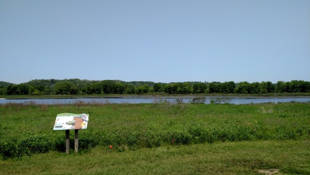 The wetland at Nahant Marsh