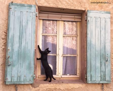 gatto su una finestra di Gordes