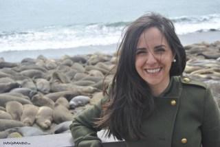 leoni marini sulle spiagge della California