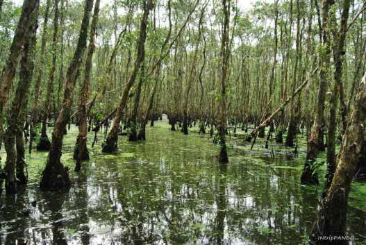 foresta pluviale di Tra Su in Vietnam