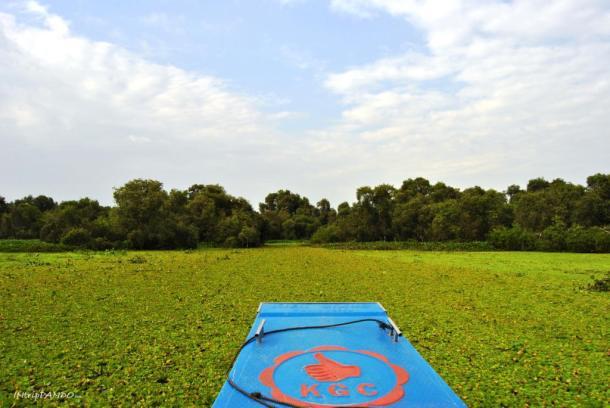 L'incredibile effetto della vegetazione sui canali della foresta di Tra Su in Vietnam