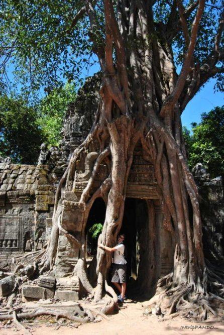 tempio Ta Som