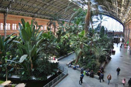 Giardino tropicale all'interno della stazione Atocha di Madrid