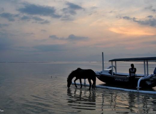 Cavallo nell'acqua delle isole Gili al tramonto
