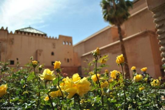 Rose con lo sfondo delle tombe Saadiane