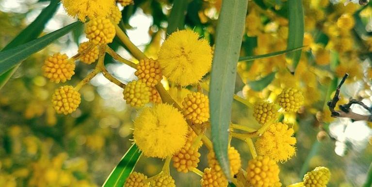 VIA PER ASPERA AD ASTRA Mimosa Introverts Network