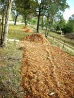 mulch prior to native boarder planting