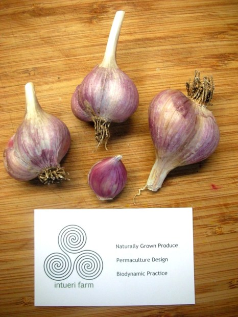 Intueri Garlic