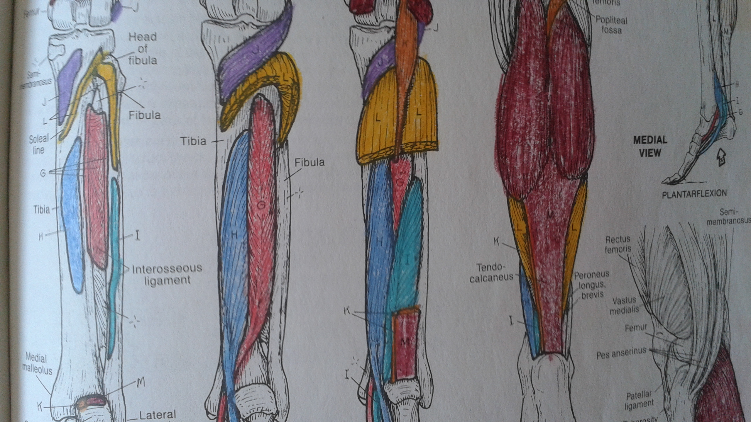 96 The Anatomy Coloring Book Kapit Pdf Download