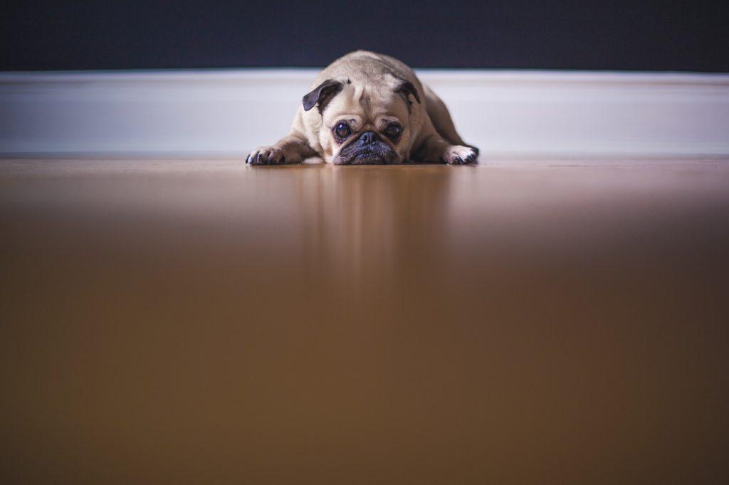育犬ノイローゼにならないために知っておくべき3つのこと