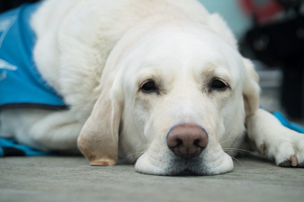 介助犬の訓練センターってどんなところ?1日限定の館内見学会