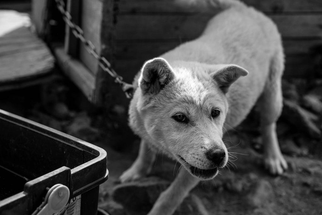 首輪やリードを怖がる犬、原因と飼い主ができること