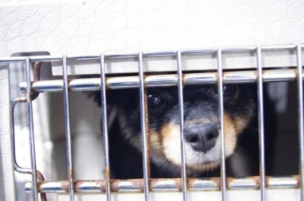 犬や猫の里親募集サイトの利用方法