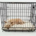 犬や猫の里親募集サイトおすすめは?~流れと費用から詐欺とトラブル