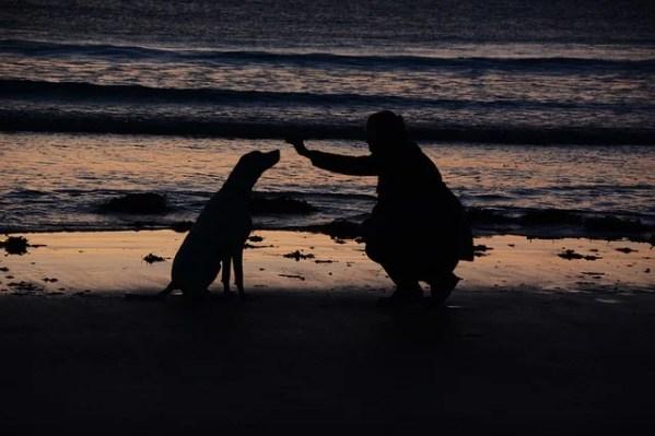 犬を飼う心構えと飼ってはいけない人の条件~必要グッズから病院選びまで