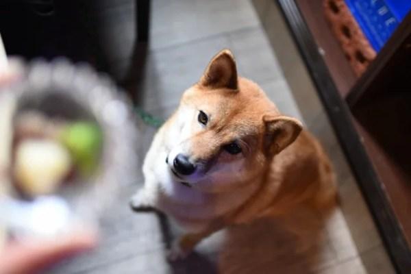 犬が大好きな食材と苦手な食材