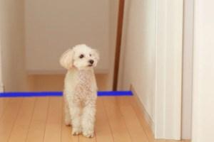 犬の怪我の防止対策