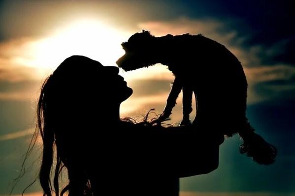 保護犬の一時預かりボランティアのしくみ~犬や猫を預かる条件や期間