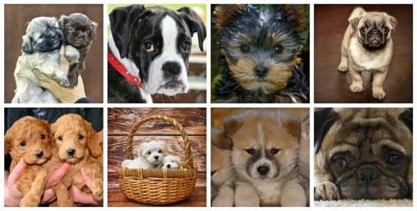 2019年人気犬30種~犬種特有のなりやすい病気を犬種別に一挙紹介