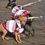 冬に犬に服を着せて散歩させるのは飼い主のエゴなのか?