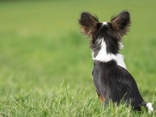 犬はどのくらいの音を聞き取れるのか?