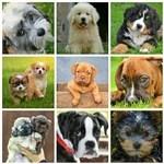 人気犬種30種