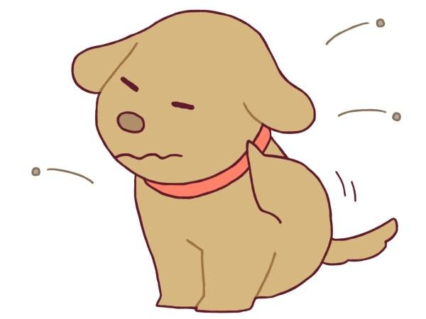 愛犬の虫対策~マダニ,ノミ,蚊の予防と死ぬこともある危険な生物