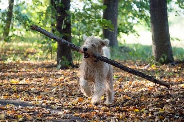 犬の諺 杖を挙げて犬を呼ぶ