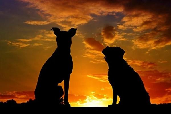 犬の諺 犬も朋輩鷹も朋輩(いぬもほうばいたかもほうばい)