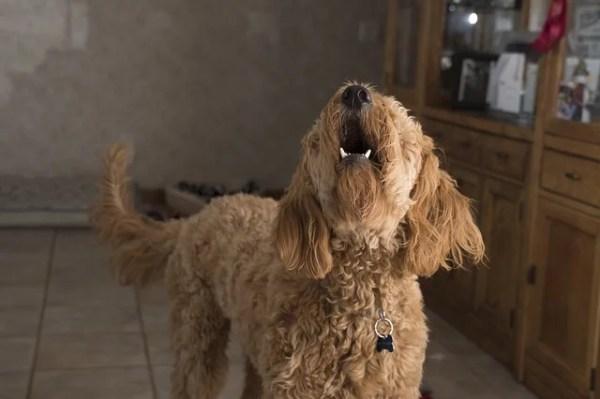 犬の諺 吠える犬にけしかける