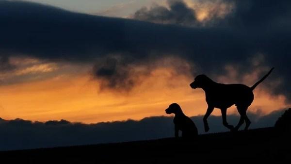 犬の諺 犬の一年は三日(いぬのいちねんはみっか)