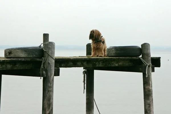 犬の諺 悪しき人に順って避けざれば、繋げる犬の柱を廻るが如し
