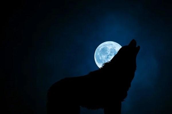 犬の諺 一犬影に吠ゆれば百犬声に吠ゆ