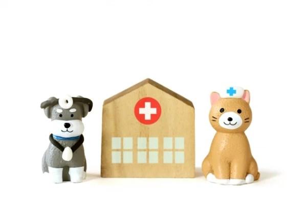 ペット保険を使う病名