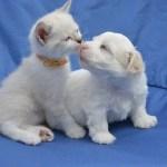 ペットショップだけじゃない~最近の犬や猫との出会い方とは?
